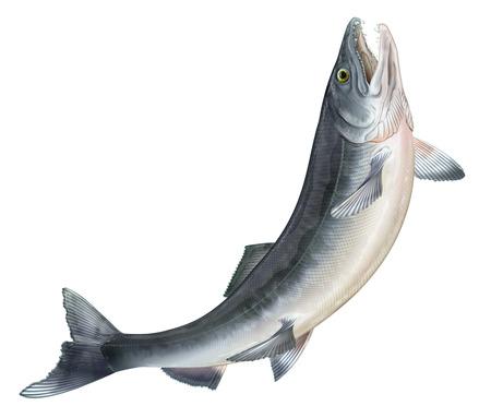 Salmon jumping photo