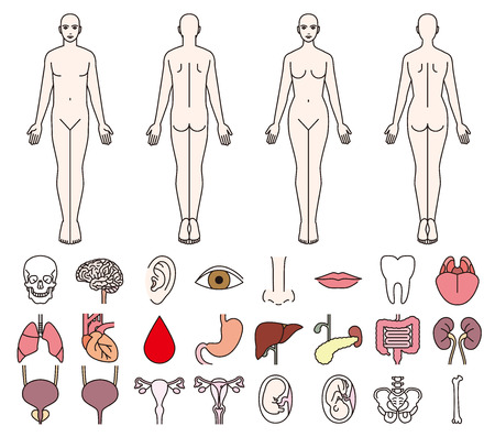 Internal organs of the human body and men and women Vetores