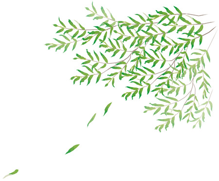 willows: Willow, leaf, wind Stock Photo