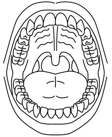 oral cavity: Oral cavity