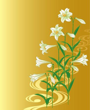 stipe: Easter lily Illustration