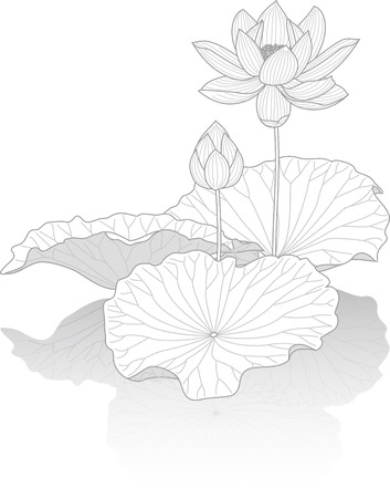 Lotus flower Ilustração