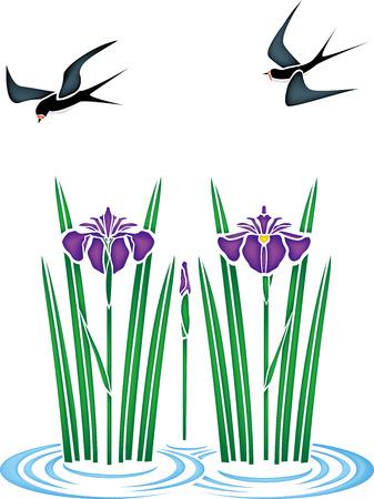 River et iris Illustration
