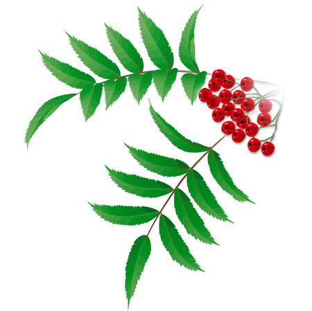 rowanberry: Rowanberry