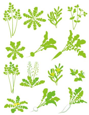 dikon: Siete hierbas de primavera material de gachas de Aduanas de Japón Vectores