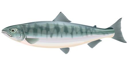 연어. 물고기 일러스트