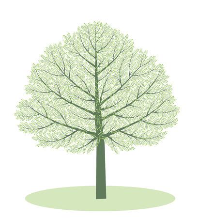early summer: Spring tree. Verdure