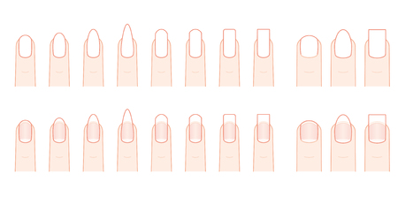 Nail shape of the fingernail