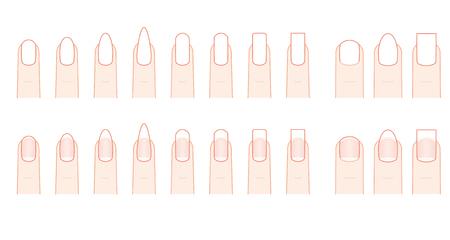 fingernail: Nail shape of the fingernail