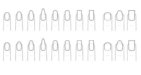 nails: Nail shape of the fingernail