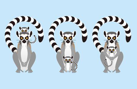 lemur: Ring tailed lemur
