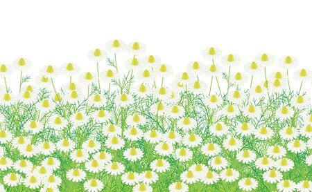 asteraceae: Asteraceae flower Illustration