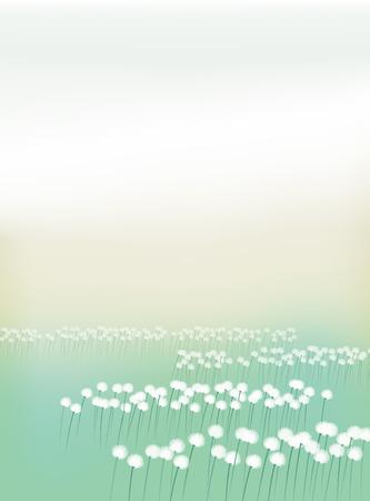 moor: Eriophorum vaginatum. Field of cotton grass. Illustration