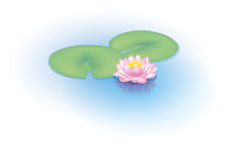 waterfront: Water lily Illustration