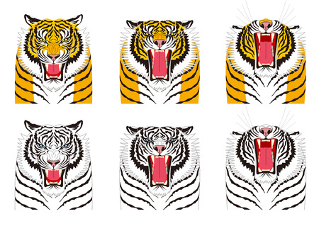 Tiger. Facial expressions. anger