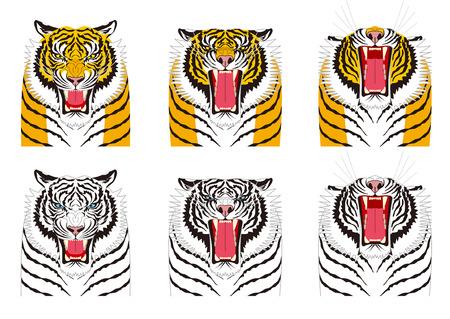 enfado: Tigre. Expresiones faciales. enfado