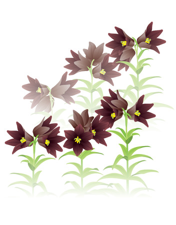 mist: Chocolate lily in the Mist