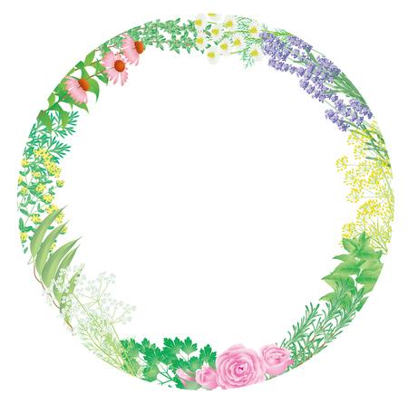 wild mint: Flower herb of frame Illustration