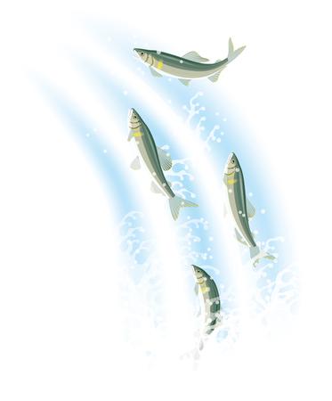 cascade mountains: River fish