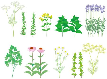 Herbs. Wild grass.