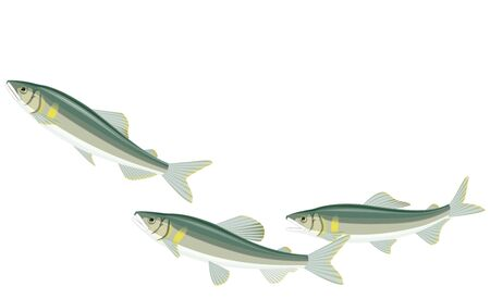 River fishes
