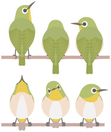 Japanese White-eye (bird)