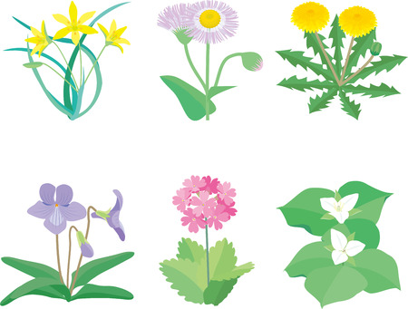 Wild plant flowers Illustration