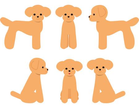 Postura del caniche de juguete del perro