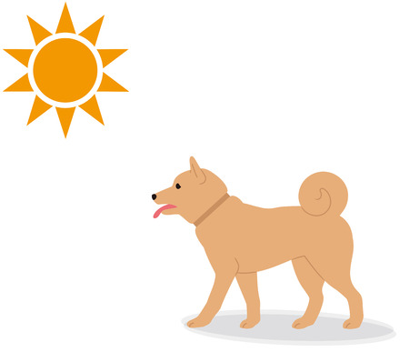 A dog walking on a sunny day.