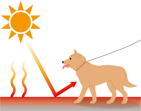 An environment where dogs are susceptible to heat stroke. Radiant heat.