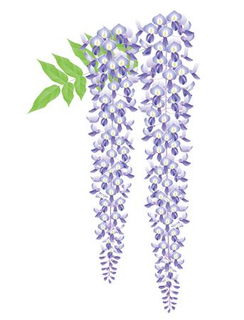 Wisteria flower. Japanese style image.
