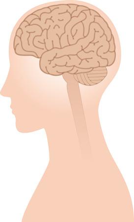 Un'immagine del cervello del paesaggio.