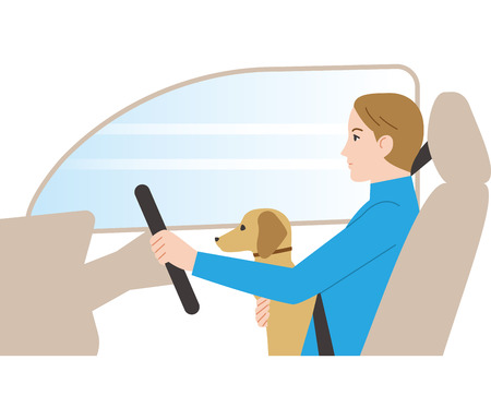 Dangerous driving. Driving while holding a dog. Illustration