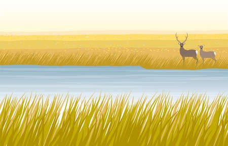 Autumn marsh and deer couple