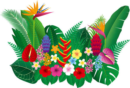 Vector illustration of tropical flowers and leaves 向量圖像