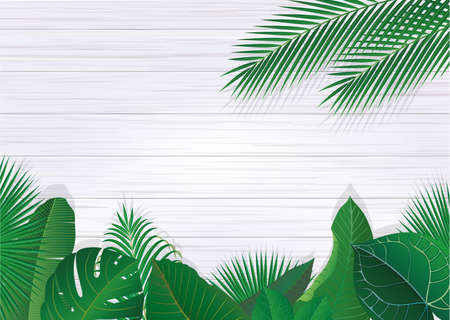 Tropical plant leaves and white walls