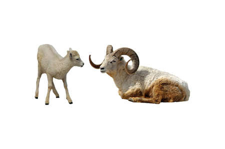 A picture of a mother and  dall sheep taken at a Wisconsin zoo