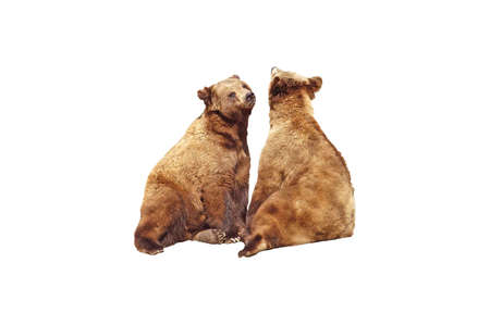 A isolated picture of two brown bears taken during mating sason at a Wisconsin zoo