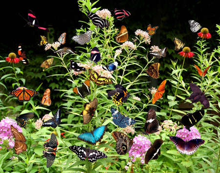 A collage of pictures of over fourty butterflies on a bush