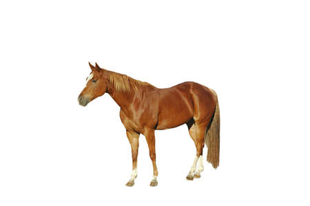 A isolated shot of a horse tken on a ranch in Indiana