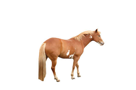A isolated shot of a horse  taken on a ranch in Indiana Stock Photo - 2590782