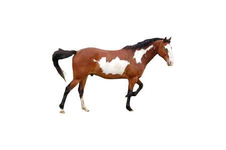 인디애나에서 목장에서 찍은 말의 고립 된 그림