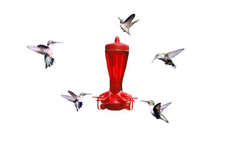 A created picture of hummingbirds extracted with a feeder Stock Photo