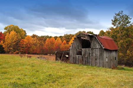 A picture of an old barn in the fall with two dear in the field                                Stock Photo
