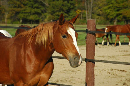 A picture of a horse taken on a ranch in Indiana