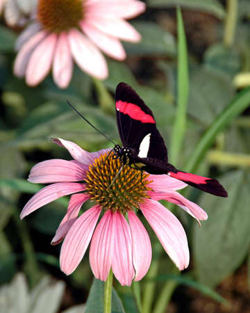 A picture of a butterfly on a flower taken at an exhibit in Chicago