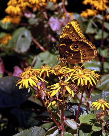 Una imagen de una mariposa sobre una flor adoptada en una exposición en Chicago  Foto de archivo - 2626407