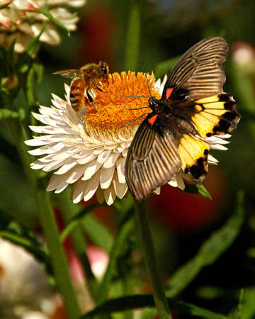 A picture of a butterfly and bee on a flower taken at an exhibit in Chicago     Stock Photo