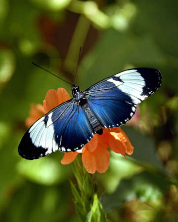A picture of a butterfly on a flower taken at an exhibit in Chicago Stock Photo