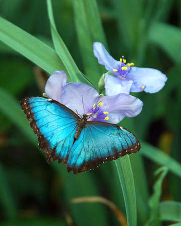 A picture of a buterfly on a flower taken at a exhibit in Chicago Stock Photo